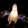 Illuminate 047 SMAL Nov 16 5ds_8457