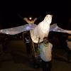 Illuminate 069 SMAL Nov 16 5ds_8528