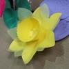 Julie Willoughby Flower Show KT (1).JPG