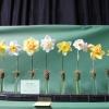 Spring Flower Garden Show EB (7).JPG